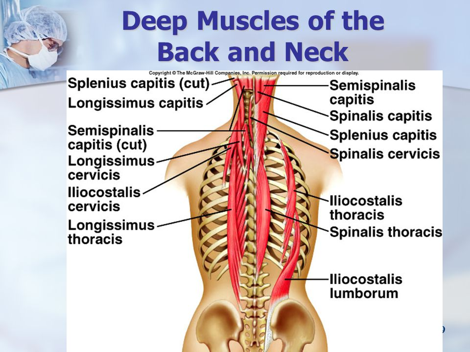 Deep Muscles of the Back and Neck