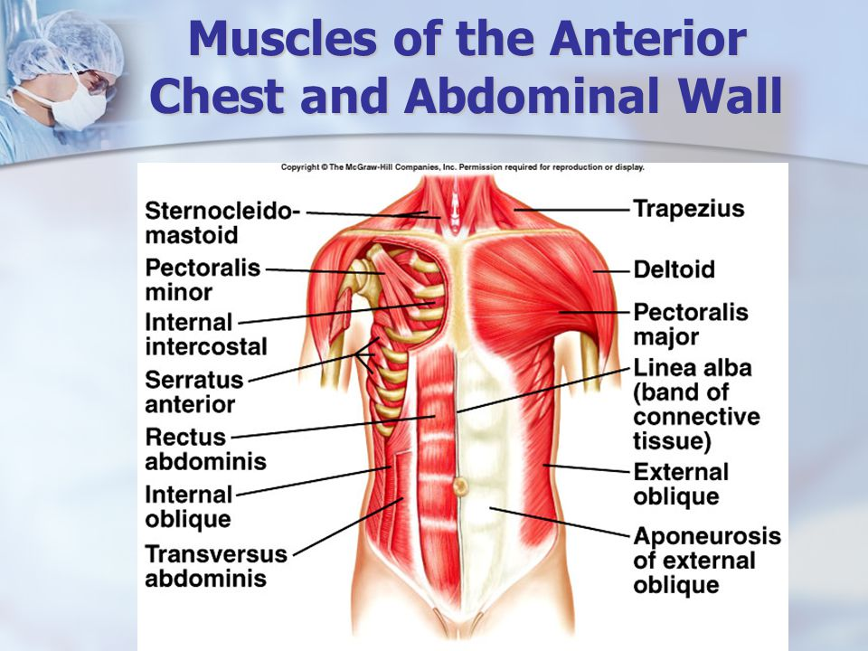 Muscles of the Anterior Chest and Abdominal Wall