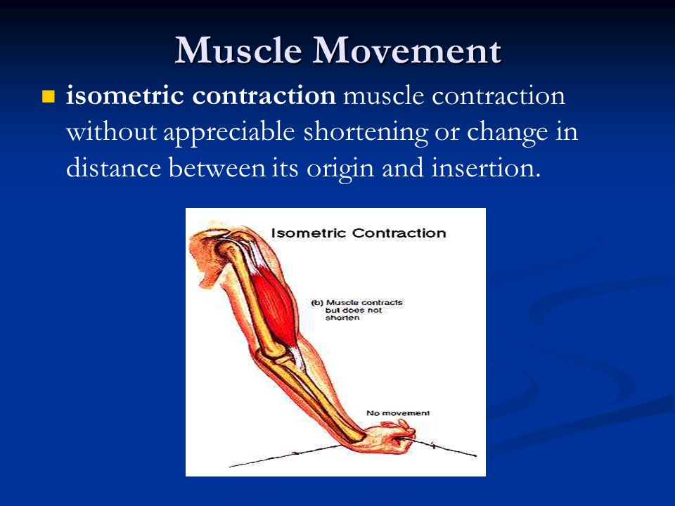 Muscle Movement isometric contraction muscle contraction without appreciable shortening or change in distance between its origin and insertion.