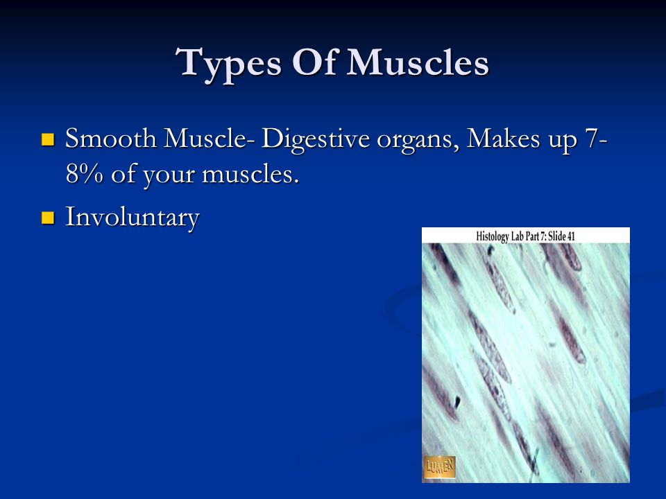 Types Of Muscles Smooth Muscle- Digestive organs, Makes up 7-8% of your muscles. Involuntary