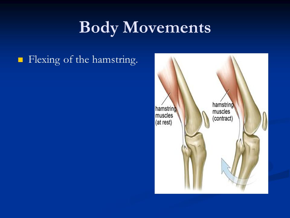 Body Movements Flexing of the hamstring.