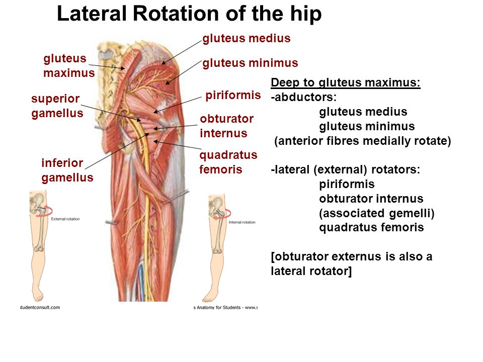 Lateral Rotation of the hip