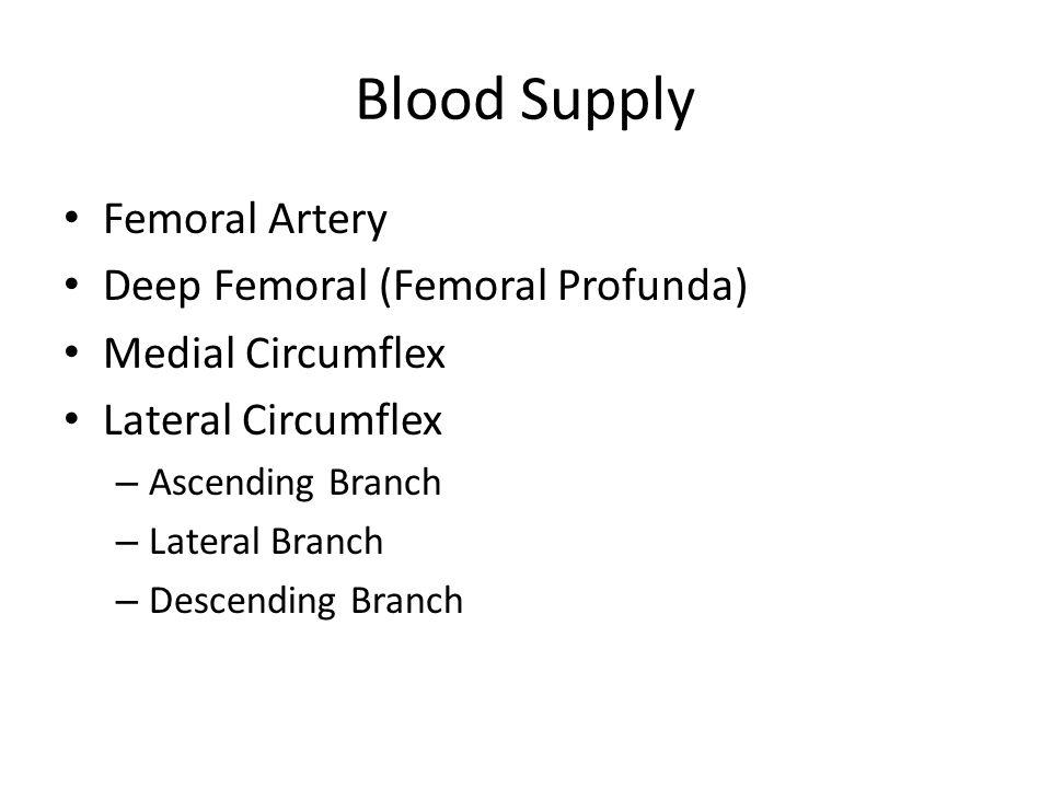 Blood Supply Femoral Artery Deep Femoral (Femoral Profunda)
