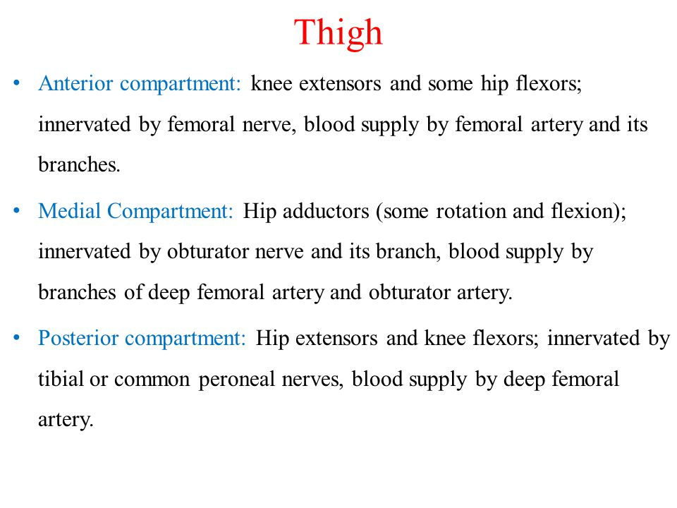 Thigh Anterior compartment: knee extensors and some hip flexors; innervated by femoral nerve, blood supply by femoral artery and its branches.