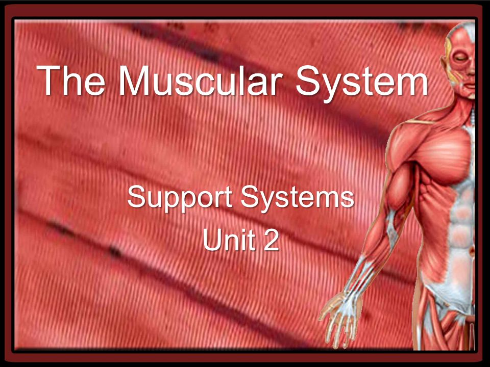 The Muscular System Support Systems Unit 2