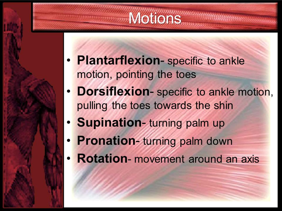Motions Plantarflexion- specific to ankle motion, pointing the toes
