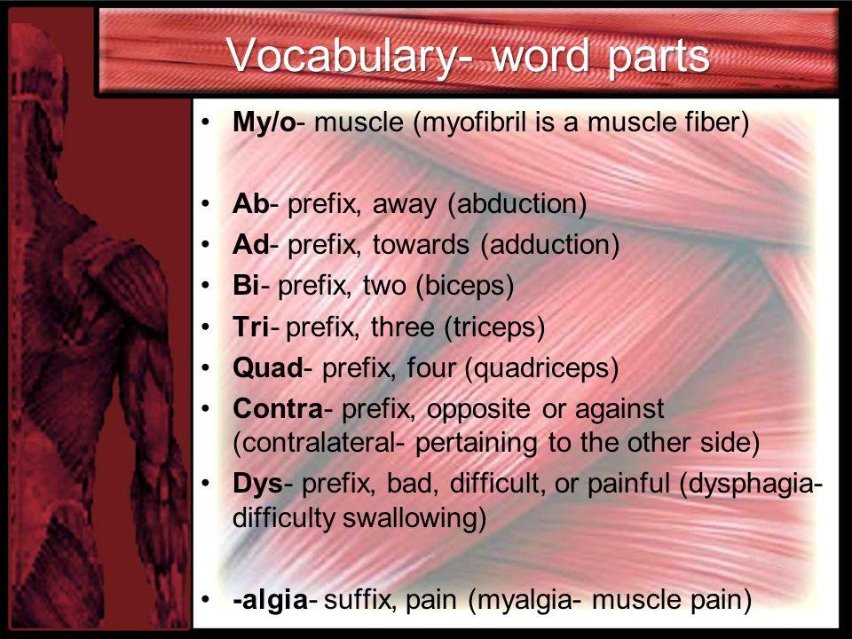 Vocabulary- word parts