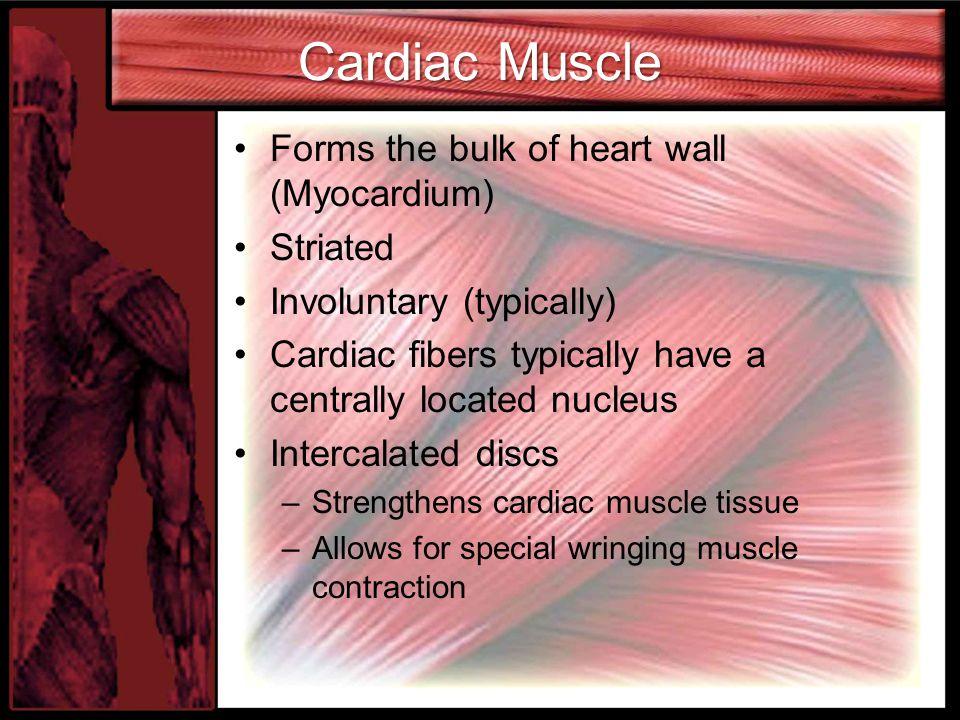 Cardiac Muscle Forms the bulk of heart wall (Myocardium) Striated