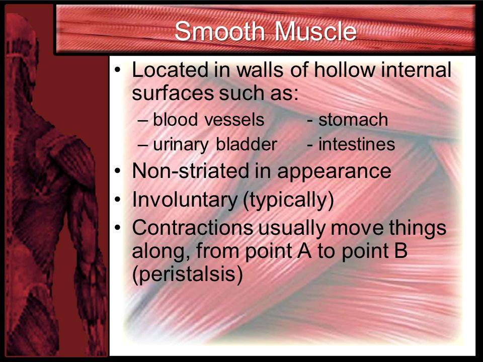 Smooth Muscle Located in walls of hollow internal surfaces such as: