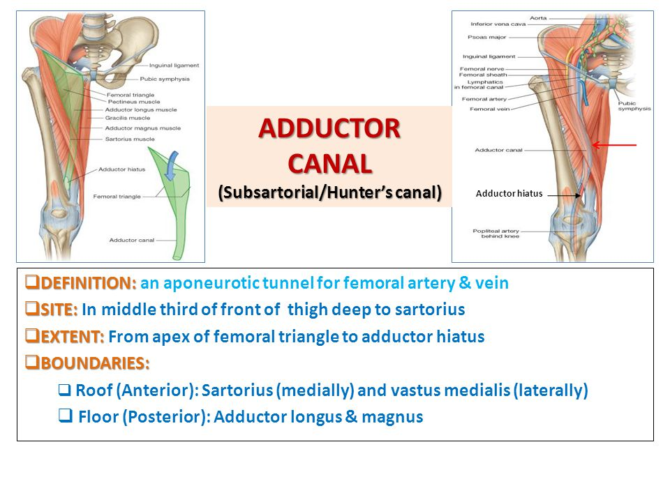 ADDUCTOR CANAL (Subsartorial/Hunter's canal)