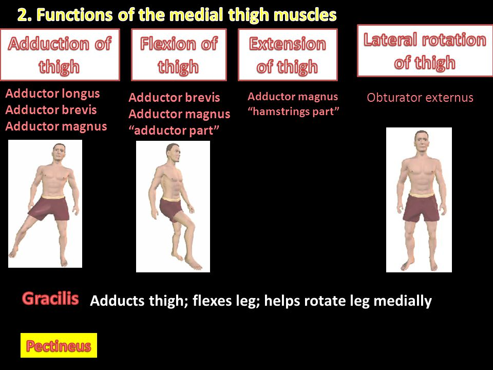 Lateral rotation of thigh