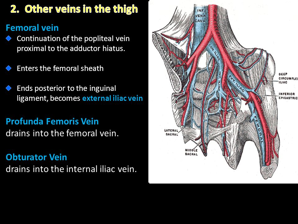 2. Other veins in the thigh