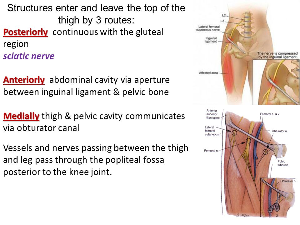 Structures enter and leave the top of the thigh by 3 routes: