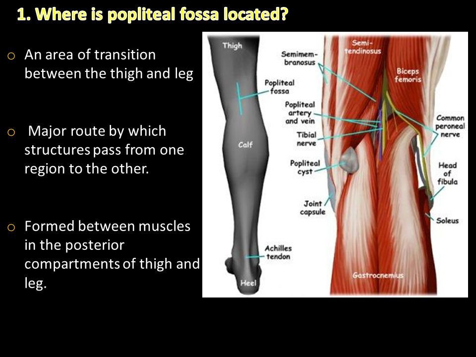 1. Where is popliteal fossa located