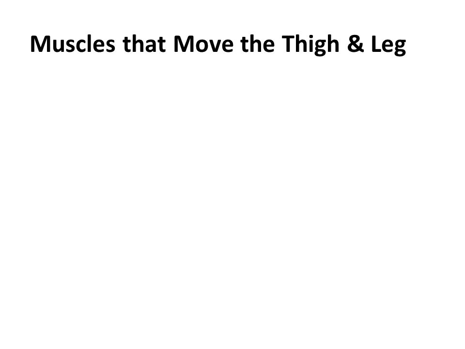 Muscles that Move the Thigh & Leg
