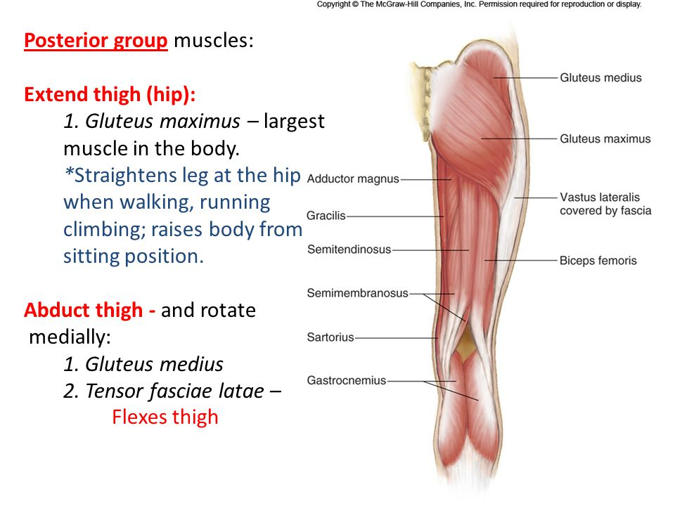 Posterior group muscles: