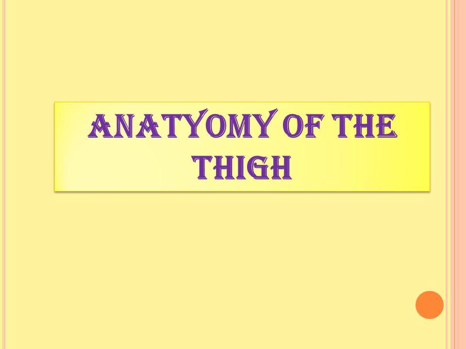 ANATYOMY OF The thigh