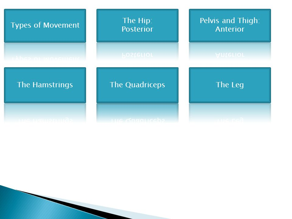 Types of Movement The Hip: Posterior. Pelvis and Thigh: Anterior. The Hamstrings. The Quadriceps.