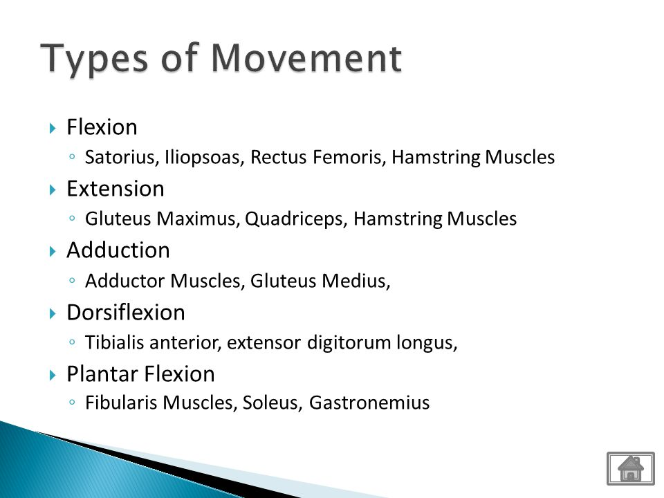 Types of Movement Flexion Extension Adduction Dorsiflexion