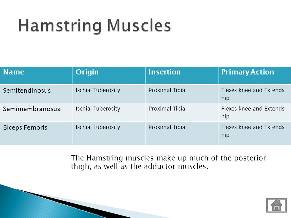 Hamstring Muscles Name Origin Insertion Primary Action Semitendinosus