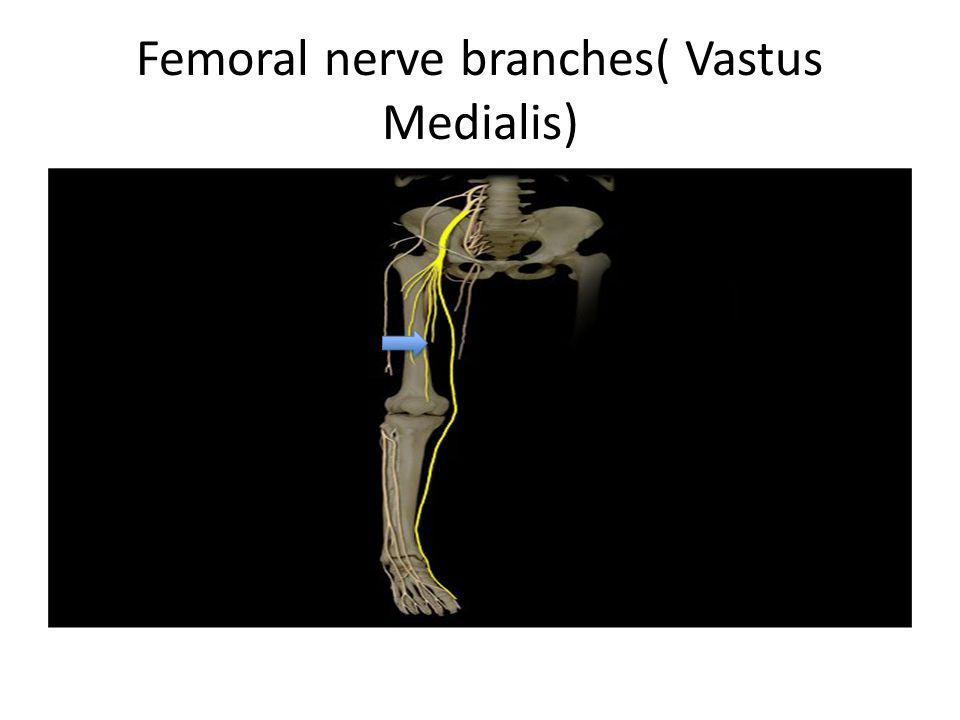 Femoral nerve branches( Vastus Medialis)