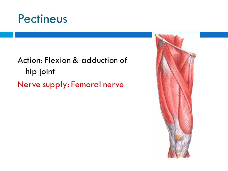 windsor university school of medicine - ppt video online download, Muscles