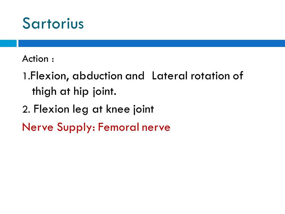 Sartorius Nerve Supply: Femoral nerve Action :