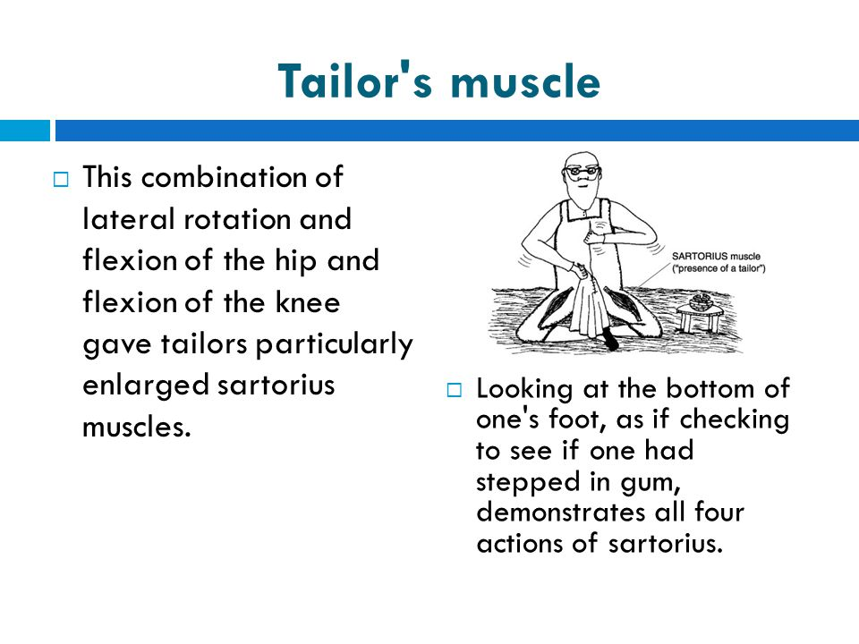 Tailor s muscle