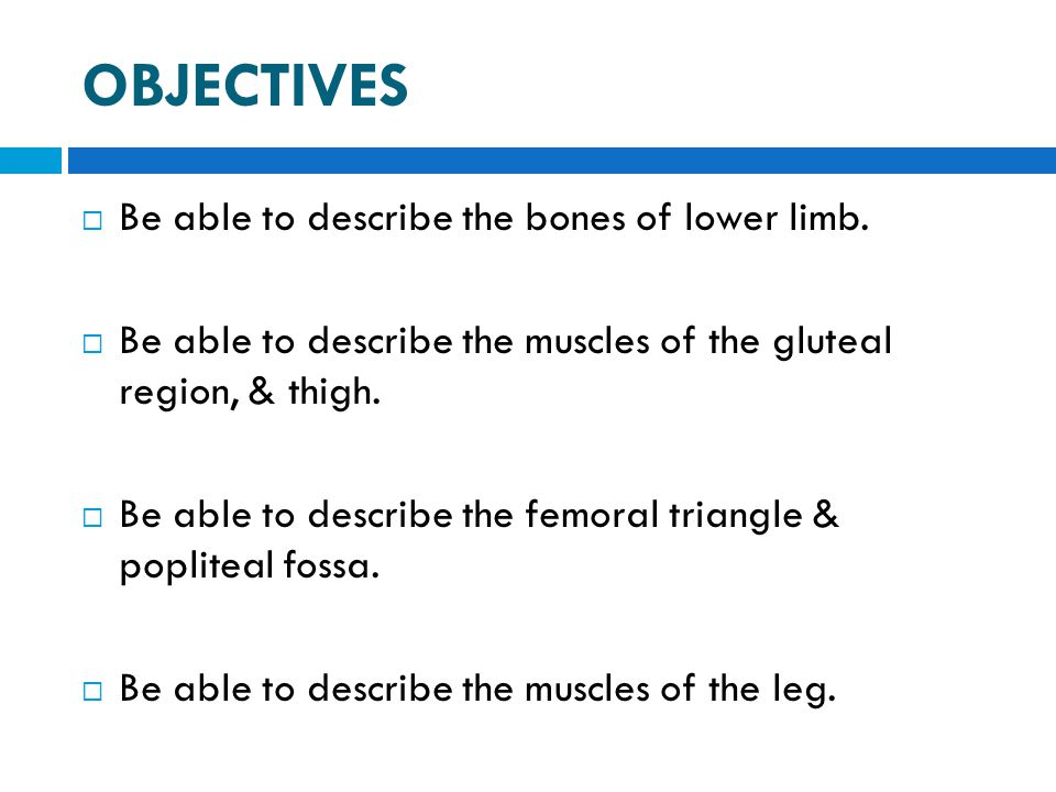 OBJECTIVES Be able to describe the bones of lower limb.