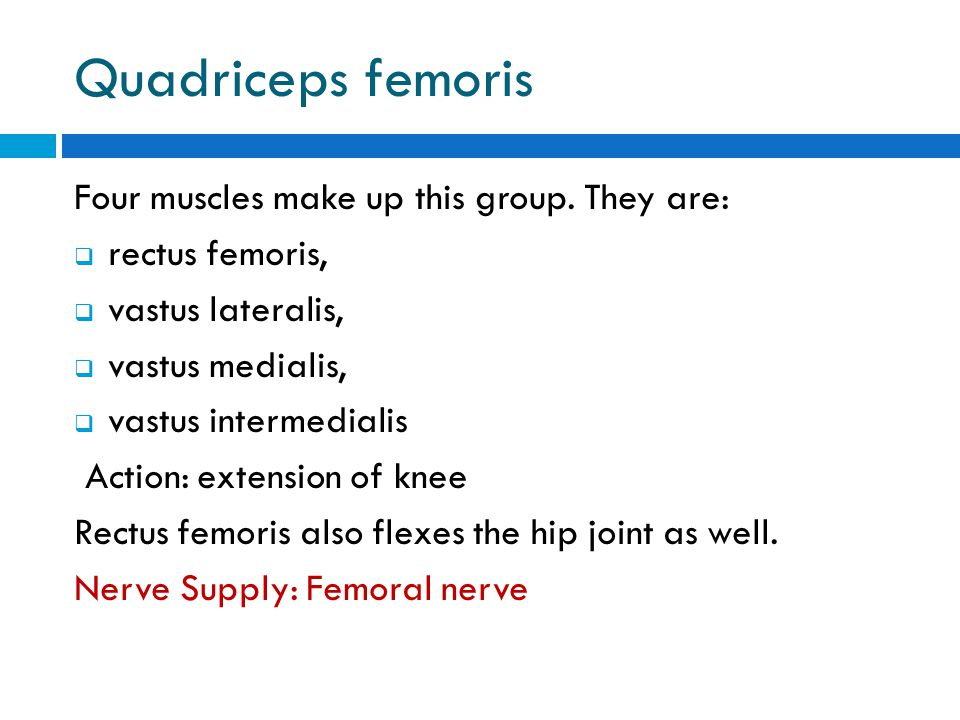 Quadriceps femoris Four muscles make up this group. They are: