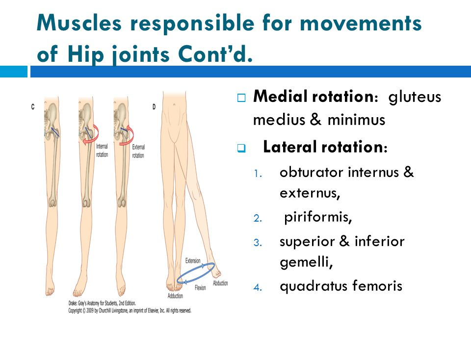 Muscles responsible for movements of Hip joints Cont'd.