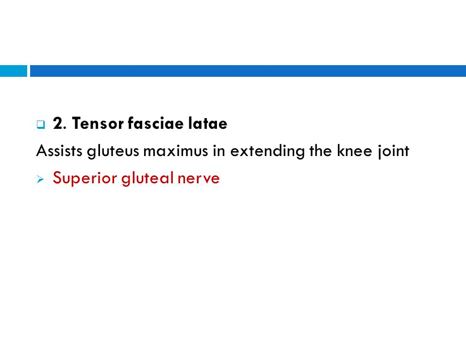 Assists gluteus maximus in extending the knee joint