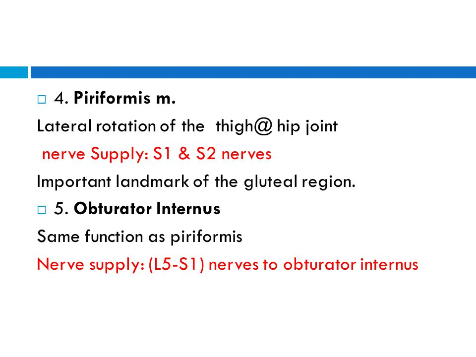 Lateral rotation of the thigh@ hip joint nerve Supply: S1 & S2 nerves