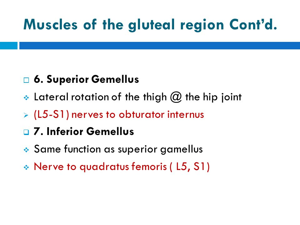 Muscles of the gluteal region Cont'd.