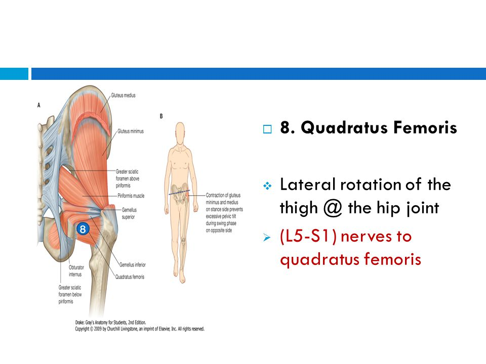 Lateral rotation of the thigh @ the hip joint