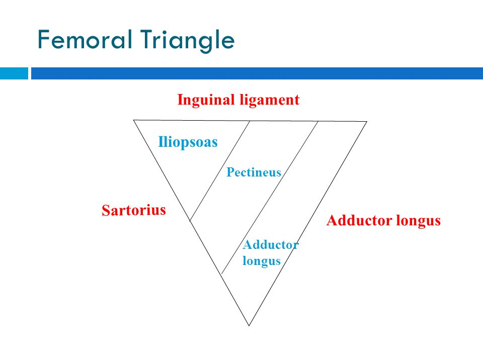 Femoral Triangle Inguinal ligament Iliopsoas Sartorius Adductor longus