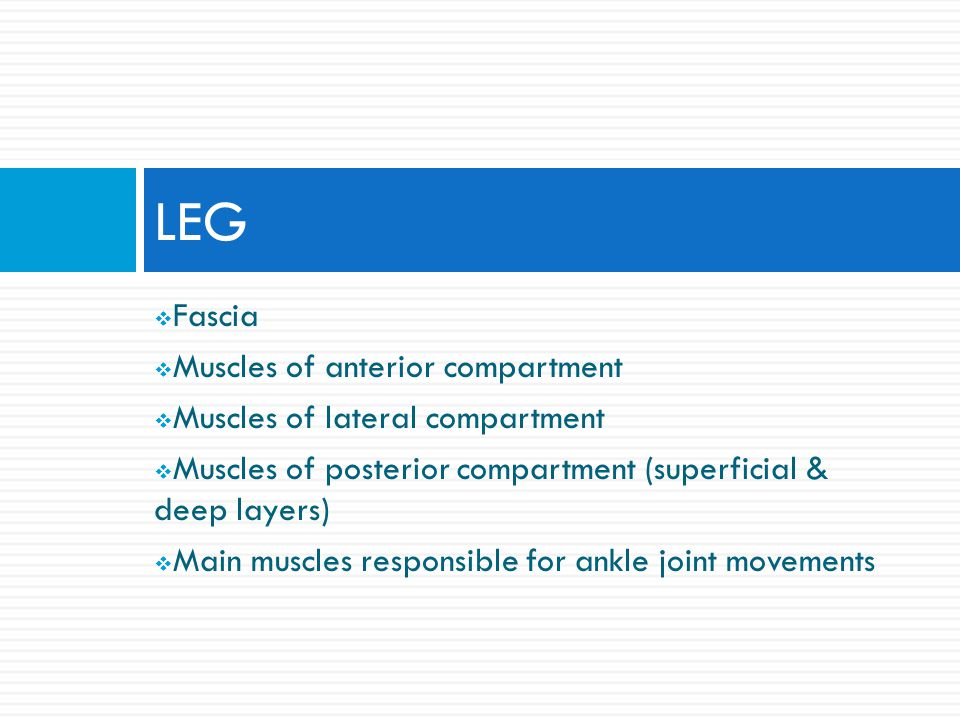 LEG Fascia Muscles of anterior compartment