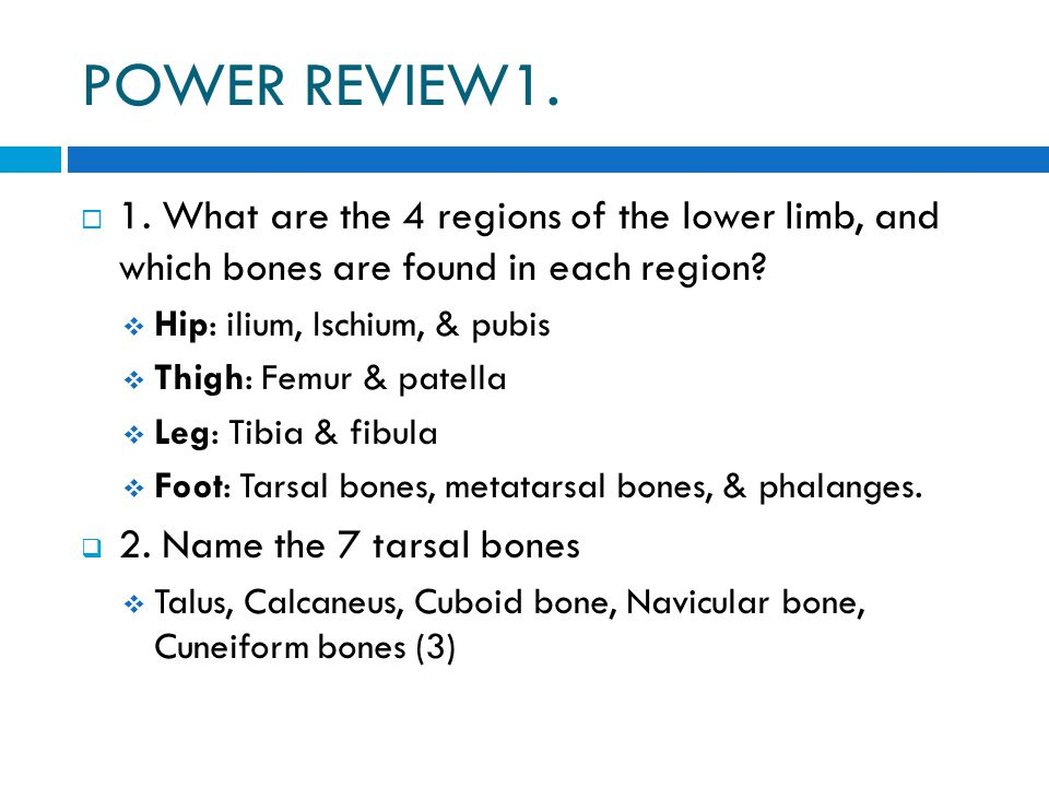 POWER REVIEW1. 1. What are the 4 regions of the lower limb, and which bones are found in each region