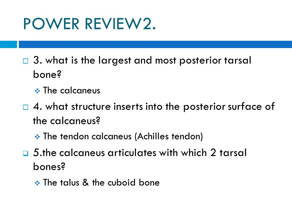 POWER REVIEW2. 3. what is the largest and most posterior tarsal bone