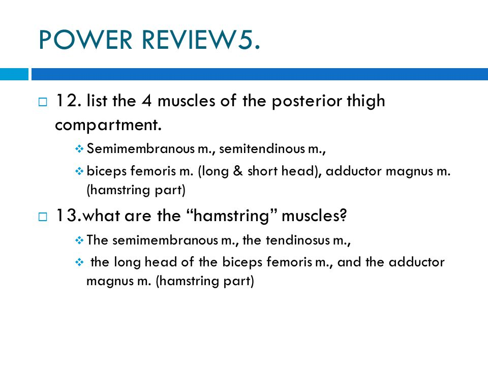 POWER REVIEW5. 12. list the 4 muscles of the posterior thigh compartment. Semimembranous m., semitendinous m.,