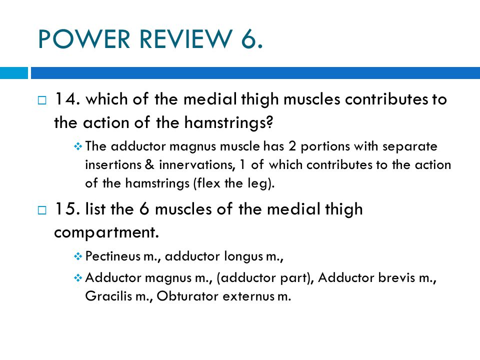 POWER REVIEW 6. 14. which of the medial thigh muscles contributes to the action of the hamstrings