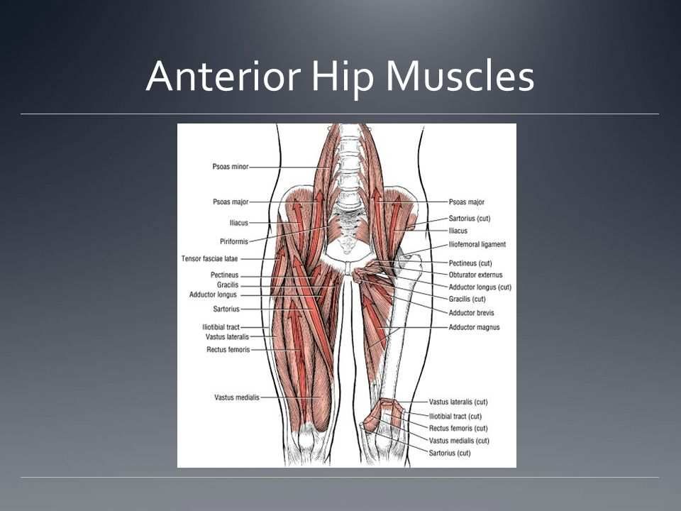 The Lower Extremity The Hip - ppt download