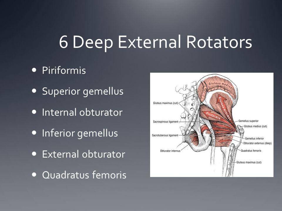 6 Deep External Rotators