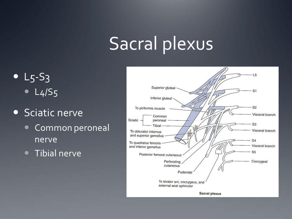 Sacral plexus L5-S3 Sciatic nerve L4/S5 Common peroneal nerve