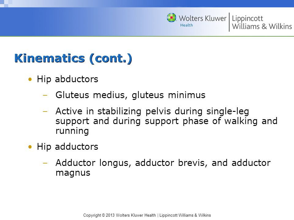 Kinematics (cont.) Hip abductors Gluteus medius, gluteus minimus