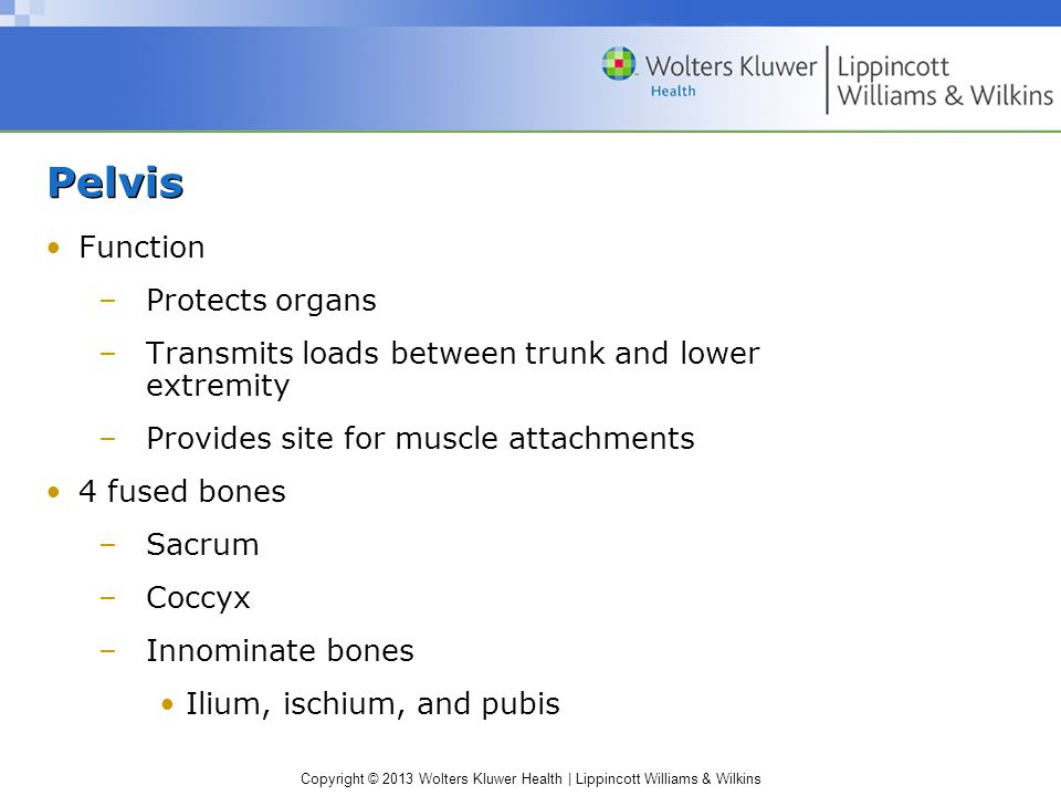 Pelvis Function Protects organs