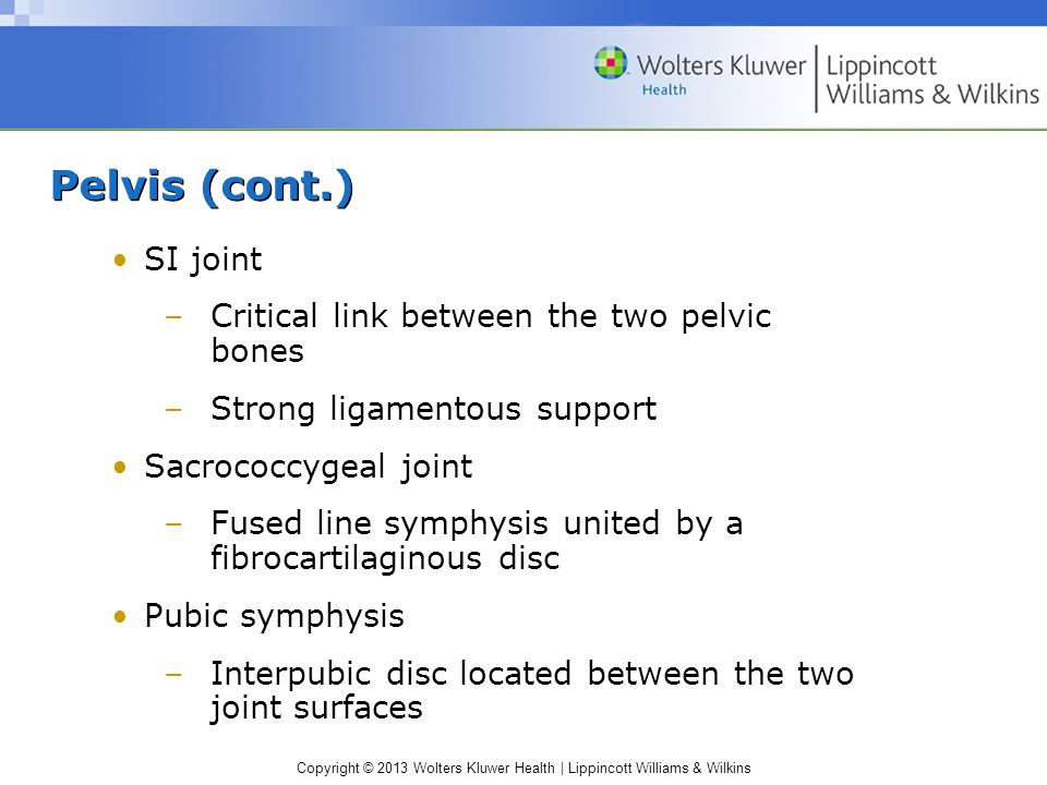Pelvis (cont.) SI joint Critical link between the two pelvic bones
