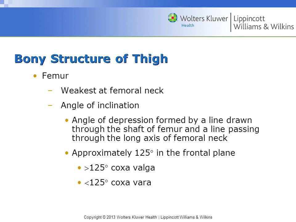 Bony Structure of Thigh