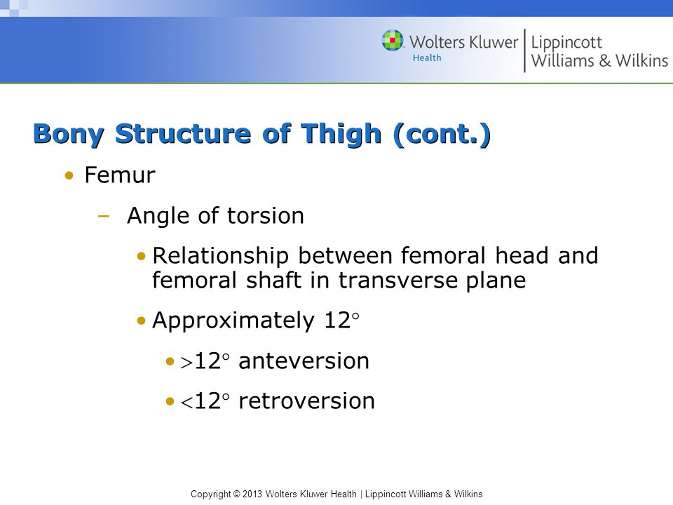 Bony Structure of Thigh (cont.)