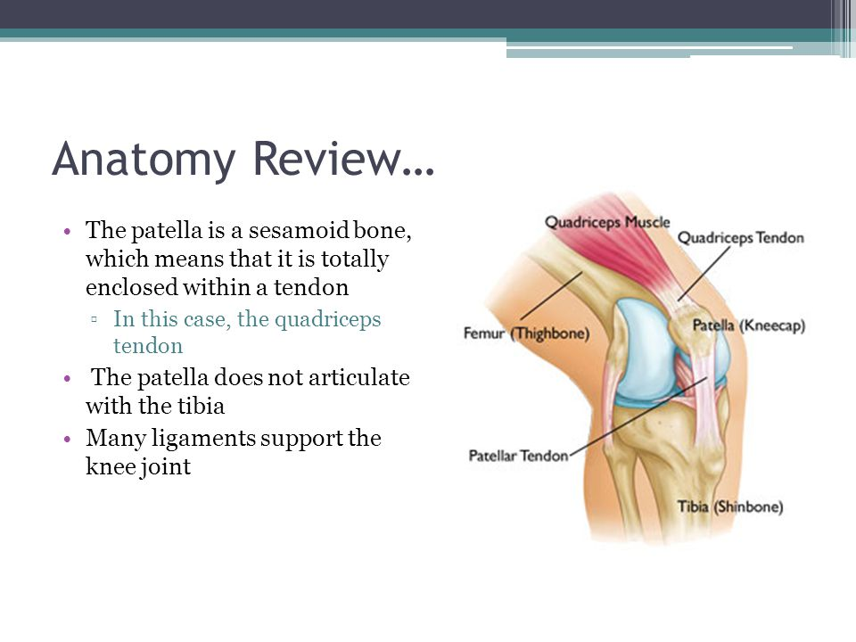 Anatomy Review… The patella is a sesamoid bone, which means that it is totally enclosed within a tendon.